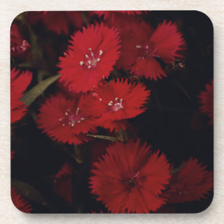 red carnations coasters