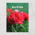 Red Carnations Happy Birthday Postcard postcard