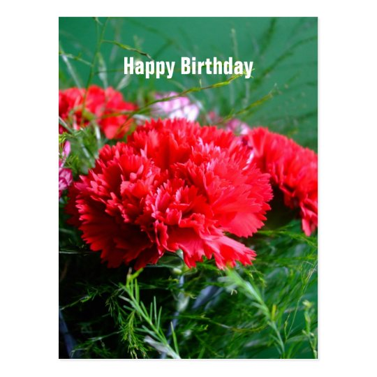 red carnations happy birthday postcard