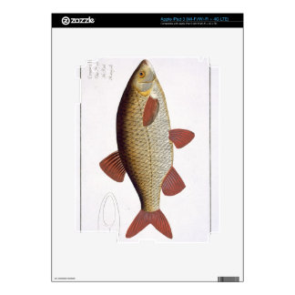 Red Carp (Cyprinus Erithrophthalmus) plate I from iPad 3 Skins