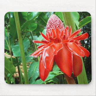 Red Carribean Rose Exotic Flower Mouse Pad