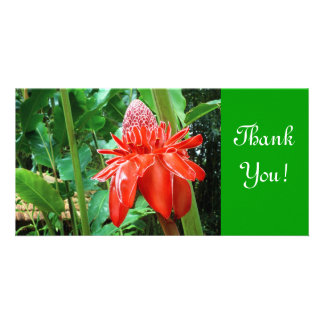 Red Carribean Rose Exotic Flower Photo Card