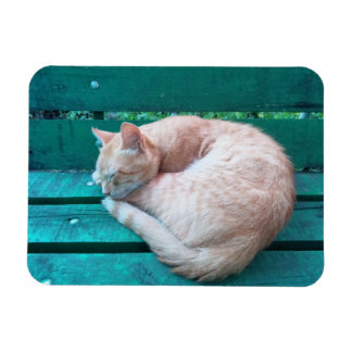 Red Cat Sleeping on Bench 2 Magnet