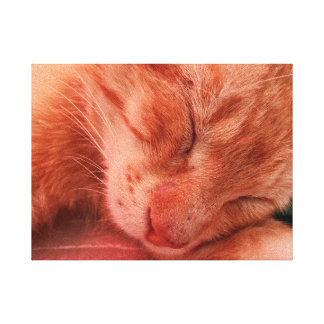 Red Cat Sleeping on Bench 4 Canvas Print