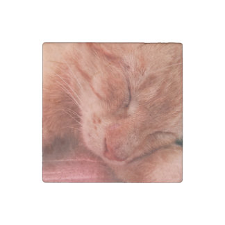 Red Cat Sleeping on Bench 4 Stone Magnet