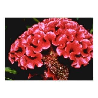 Red Celosia flowers 5x7 Paper Invitation Card