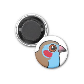 Red-cheeked Cordonbleu 1 Inch Round Magnet