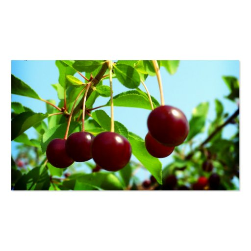 Red cherries - add your own touch business card