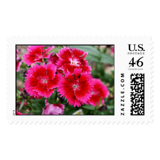 Red Cherry Dianthus Stamp