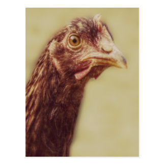 Red Chicken Head Close Up Picture Postcards