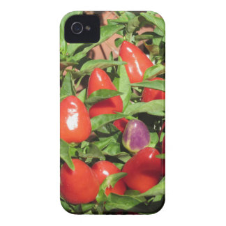 Red chili peppers hanging on the plant iPhone 4 case