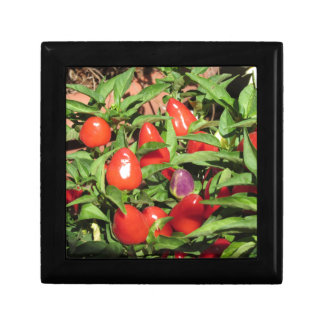 Red chili peppers hanging on the plant keepsake box