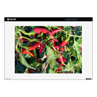 Red chili peppers hanging on the plant laptop skins