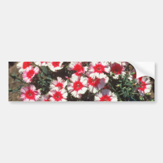 Red China Pink (Dianthus Chinensis) flowers Car Bumper Sticker
