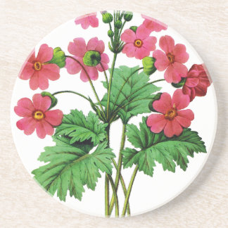 Red Chinese Primrose by Pierre Joseph Redoute Coaster