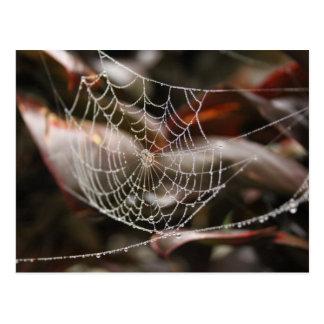 Red chispeante de la araña tarjeta postal