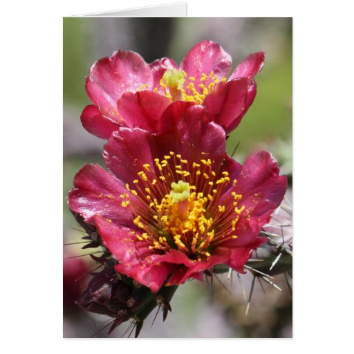 Red Cholla Blooms Card