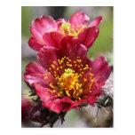 Red Cholla Blooms Postcard
