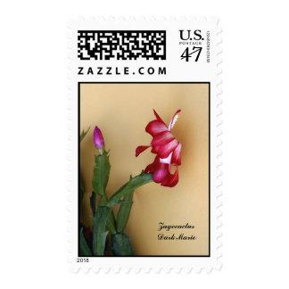 Red Chrismas Cactus Postage Stamp