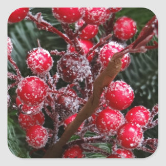 Red Christmas Berries. Square Sticker