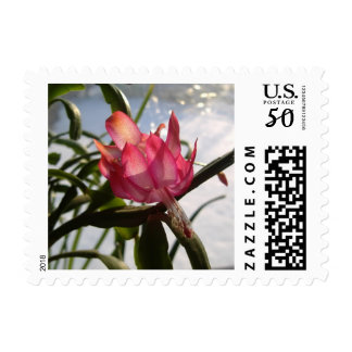 Red Christmas Cactus Flower In The Snow Postage