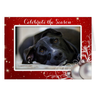 Red Christmas Family Pet Photo Greeting Card
