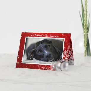 Pet holiday cards custom holiday cards zazzle red christmas family pet photo greeting holiday card m4hsunfo