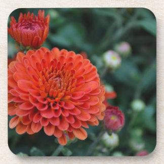 Red Chrysanthemum Coaster