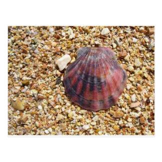 Red clam seashell on sand beach photography postcard