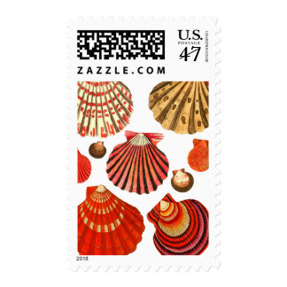 Red Clam Shells Postage