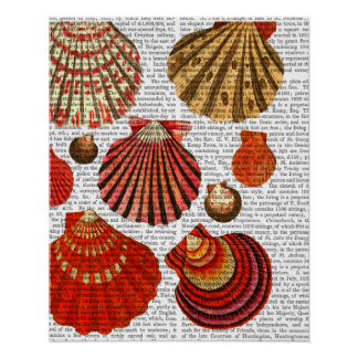 Red Clam Shells Poster