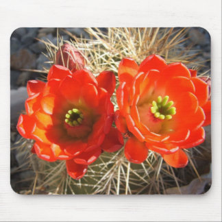 Red Claret Cup Cactus Blossoms Mouse Pad
