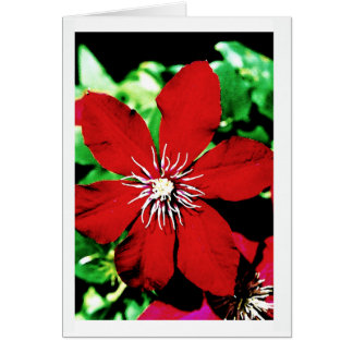 Red Clematis Climbing Flowers Card
