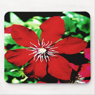 Red Clematis Climbing Flowers Mousepads
