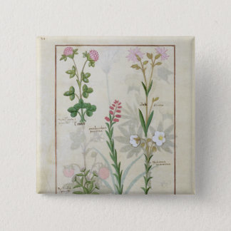 Red clover & Aube Bellidis Onobrychis & Hyssopus Pinback Button