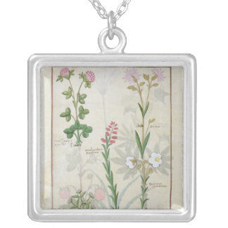 Red clover & Aube Bellidis Onobrychis & Hyssopus Silver Plated Necklace