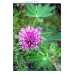 Red Clover Blossom 2 Greeting Card