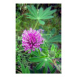 Red Clover Blossom 2 Poster