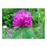 Red Clover Blossom 3 Greeting Card