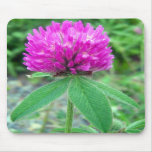Red Clover Blossom 3 Mousepad