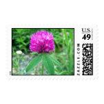 Red Clover Blossom 3 Stamp