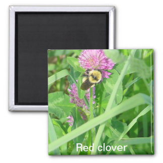 Red clover 2 inch square magnet