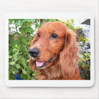 red cocker-spaniel-.png mouse pad