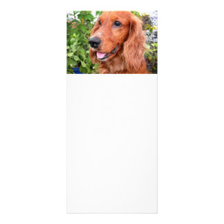 red cocker-spaniel-.png rack card
