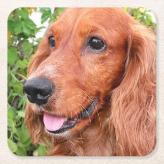 red cocker-spaniel-.png square paper coaster