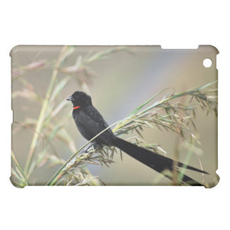 Red Collared Widow South Africa iPad Mini Cover