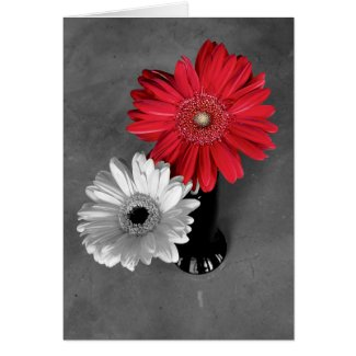 Red Color Splash Gerber Daisy Photograph Card