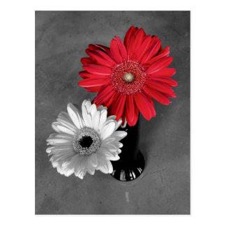 Red Color Splash Gerber Daisy Photograph Postcard