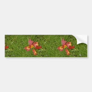 Red colored maple leaves fallen on carpet of moss car bumper sticker