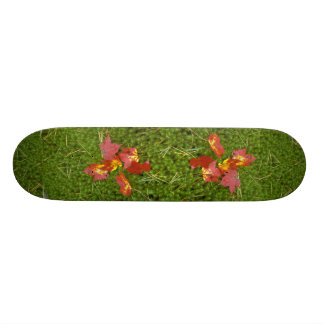 Red colored maple leaves fallen on carpet of moss skate board decks